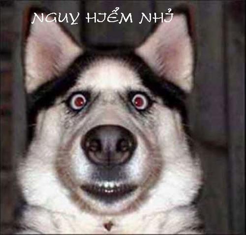 Facebook Photo mode, Photo mode on Face Humor