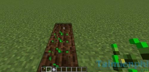 Cách làm ruộng trồng lúa mì trong game Minecraft 4