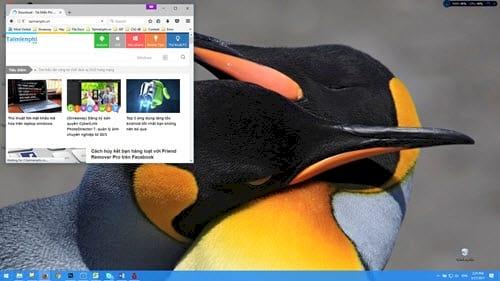 Tải bộ giao diện, hình nền động vật đẹp nhất dành cho Windows 10, 8, 7