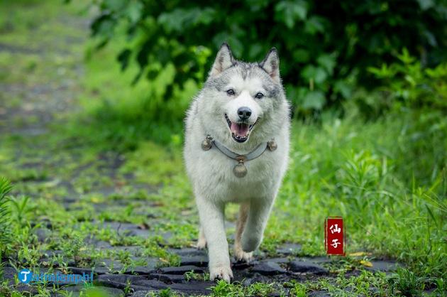 Hãy kể về một kỉ niệm đáng nhớ của em đối với một con vật nuôi mà em yêu thích 2