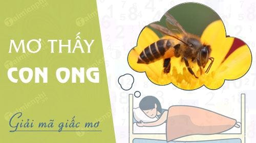 Nằm mơ thấy con ong, nằm mơ thấy ong đốt, tổ ong mật 0