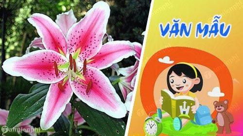 ta hoa ly con goi la bach hop loa ken lily hue tay