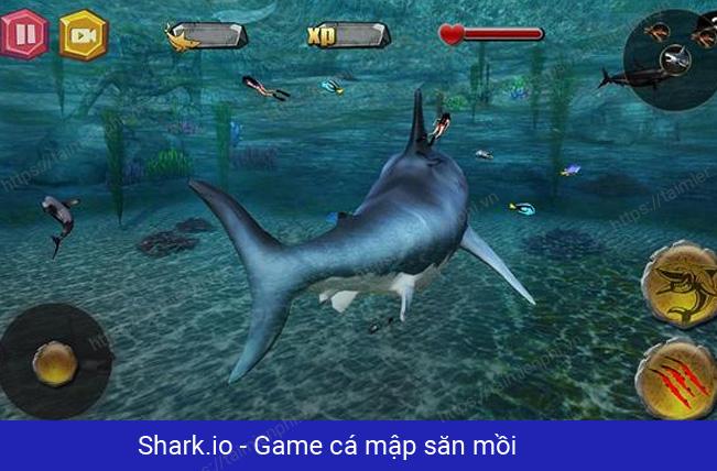 Top game cá mập nhiều người chơi