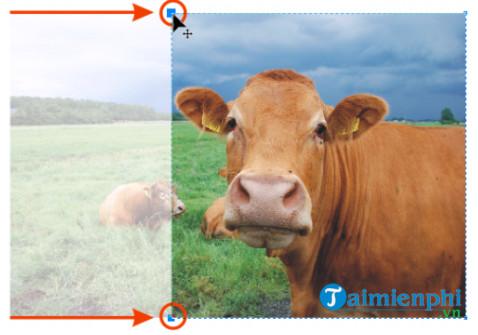 Cách cắt ảnh bitmap trong CorelDRAW