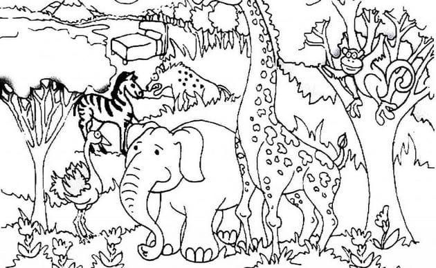 Tranh tô màu con vật cho bé tập tô 15
