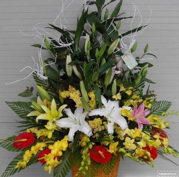 mau lang hoa dep 14
