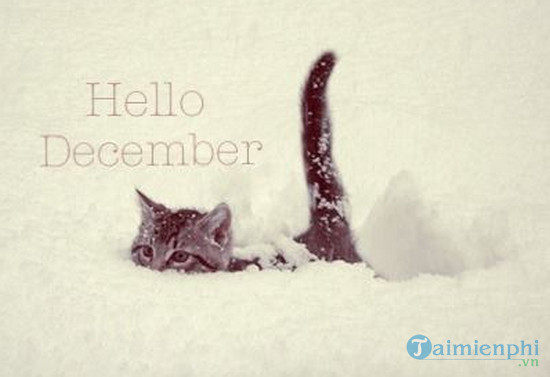 Hình ảnh chào tháng 12 làm STT