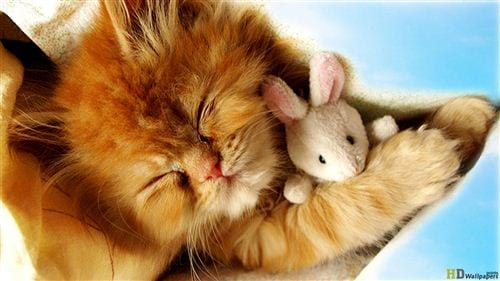 Hình buồn ngủ dễ thương, đáng yêu, ảnh ngủ ngáp vui, hài hước