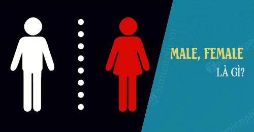 Male là gì? Female là giới tính Nam hay nữ trong tiếng Anh? 0