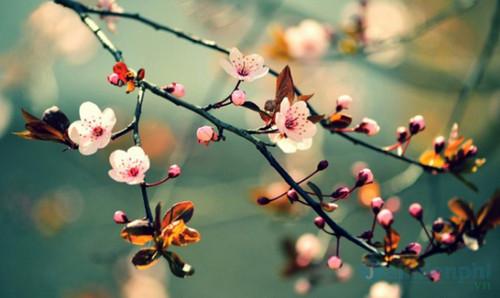Biểu cảm về mùa xuân 2