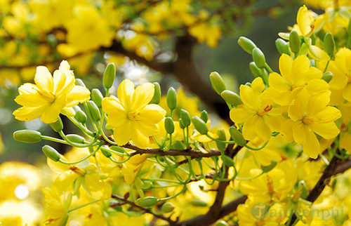 Biểu cảm về mùa xuân 3