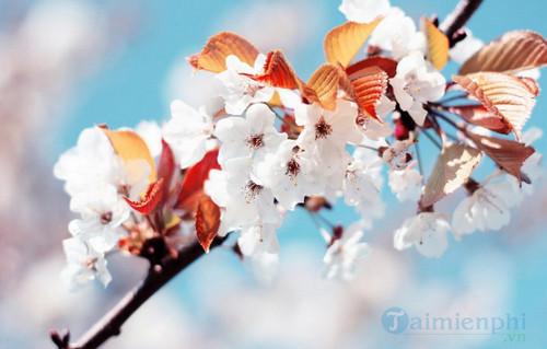 Biểu cảm về mùa xuân 4