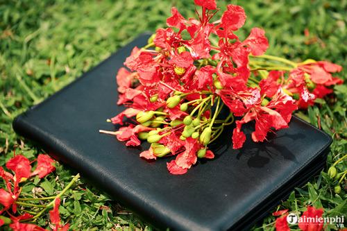 Những bài văn tả cây phượng, hoa phượng hay nhất 10