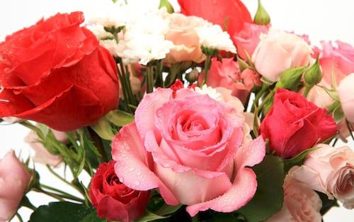 hinh anh hoa dep 8 3 nhung bo hoa dep nhat danh cho ngay phu nu 15