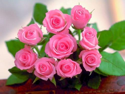 hinh anh hoa dep 8 3 nhung bo hoa dep nhat danh cho ngay phu nu 5