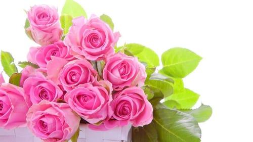 hinh anh hoa dep 8 3 nhung bo hoa dep nhat danh cho ngay phu nu 8
