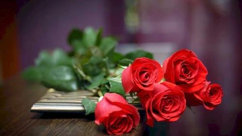 hinh anh hoa dep 8 3 nhung bo hoa dep nhat danh cho ngay phu nu 9